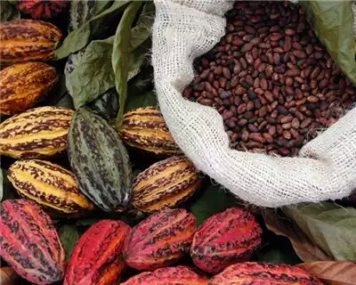 Ghana's position in the Cocoa world enhanced by Olam's acquisition
